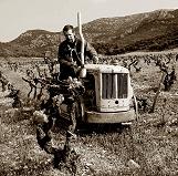 vineyard_b.jpg